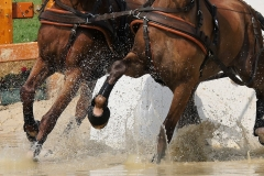 HorseInside.com