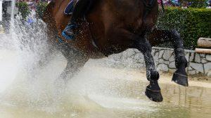 Die Kraft der Pferd lockt jedes Jahr rund 350.000 auf das Turniergelände. 5 Disziplinen an einem Ort, das gibt es auf der Welt sonst nirgends-