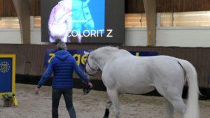 Zangersheide: Wo Springpferde-Champions geboren werden