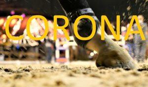 Corona: Pferde wissen nichts von einem Virus